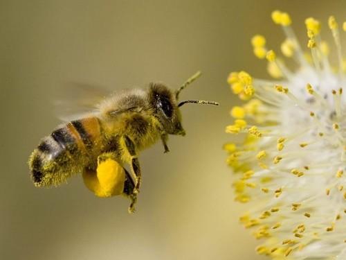 https://www.saphirnews.com/agenda/Les-ruches-d-ICI-initiation-a-l-apiculture_ae608793.html