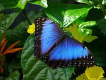 La révolution biomimétique, solution pour un avenir soutenable ?