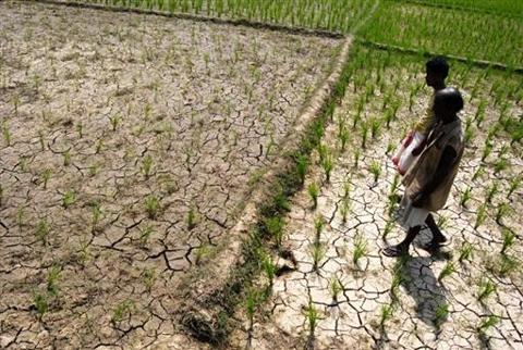 Conséquence des activités humaines, la désertification fait disparaître 24 milliards de tonnes de sol fertile chaque année, réduisant la production agricole. Plus de 250 millions de personnes en sont directement affectées.