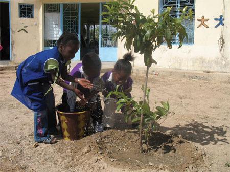 Après avoir été le premier à obtenir le label AB pour ses dattes, Bionoor, société de négoce en matières premières, poursuit sa diversification, notamment en aidant à planter des arbres dans les régions du Sahel. (photo : Les Brigades vertes)