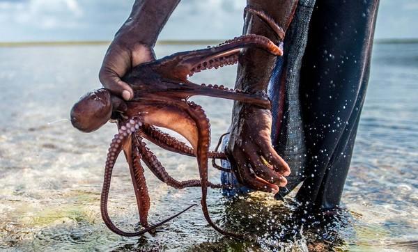 L'islam à la rescousse des poulpes à Zanzibar