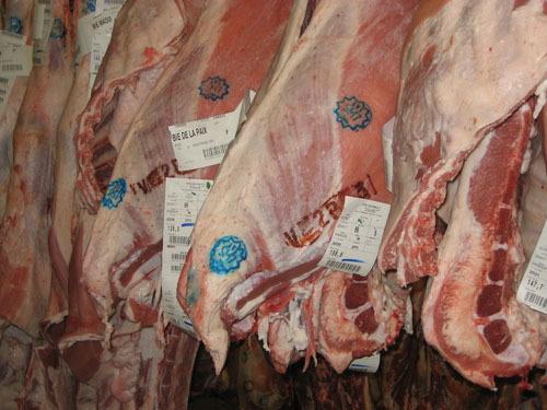 110 bovins sont abattus chaque semaine selon le rite musulman chez la société Gourault, spécialisée en viande de haut de gamme.
