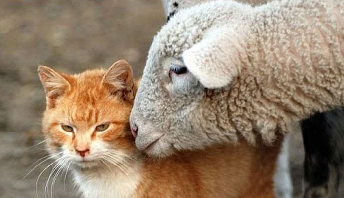 Aïd al-Adha - Tareq Oubrou : « Les animaux sont des êtres spirituels »