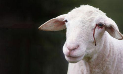 Belgique : cinq associations musulmanes portent plainte contre Gaia