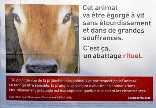 Cette affiche de la campagne nationale contre l'abattage rituel est désormais visible en France.