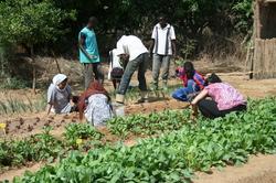 Des sénégalais exploitent la terre en partenariat avec l'Ecole Soufie Internationale.