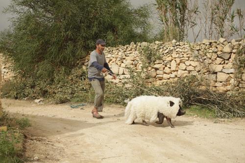 Sylvain Estibal, réalisateur : «  Ce qui unit les deux camps, c'est le rejet du cochon. De ce plus petit dénominateur commun va naître un début d'entente. Ce cochon, c'est en quelque sorte ma colombe de la paix ! »