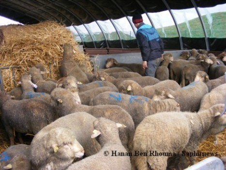 Aïd el-Kébir 2011 : les préfectures s'activent