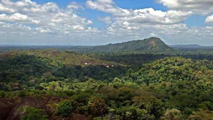 #PrayforAmazonia : pourquoi il faut s'inquiéter de l'état de l'Amazonie, en proie aux flammes