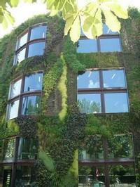 La façade tapissée de verdure