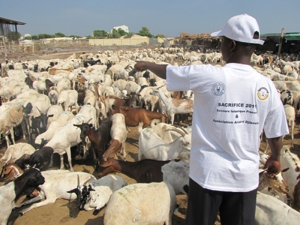 Le Secours islamique France, présent ici à Djibouti, renouvelle en 2012 son opération Aïd al-Adha (ou Aïd el-Kébir).