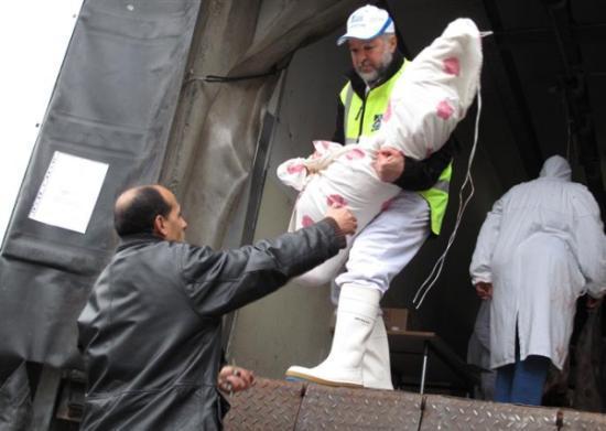 Aïd el-Kébir 2012 : à la recherche des abattoirs, couacs des préfectures