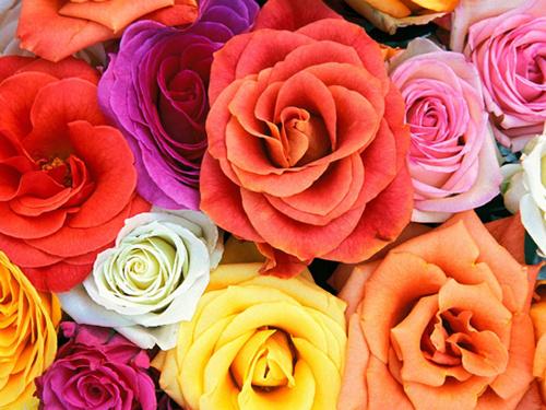 Journée de la femme : roses et sourire car rien n'est trop beau pour elles