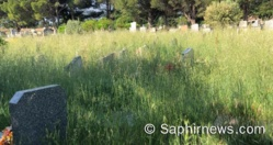 Avignon : un cimetière « laissé à l'abandon » indigne les musulmans, retour sur la polémique