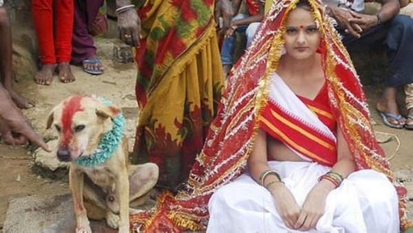 Inde : une femme épouse un chien pour éloigner le diable (vidéo)