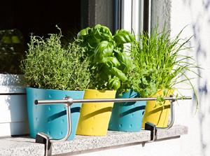Pour cultiver des plantes aromatiques (coriandre, persil, menthe, basilic, thym...) sur son balcon, il suffit d'un peu de soleil et d'un bon terreau.