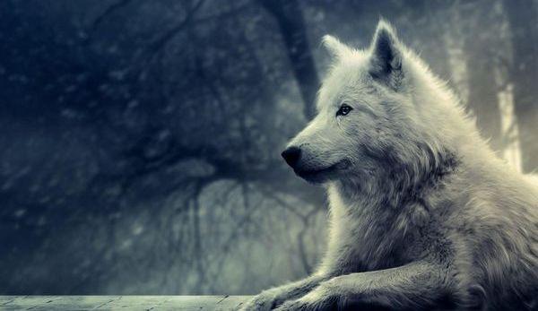 Les loups sont entrés dans Paris