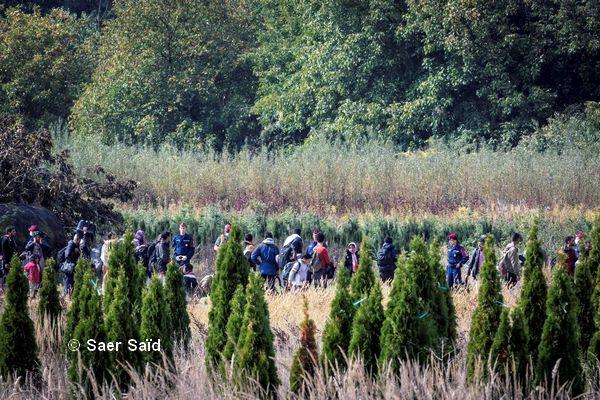 Traversée, sous contrôle policier, de la frontière croato-hongroise à travers des plantations de sapins. Zakany (Hongrie), octobre 2015. © Saer Saïd