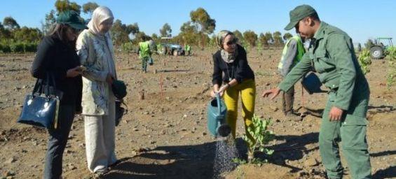 COP22 : un million d'arbres plantés en 24 heures au Maroc