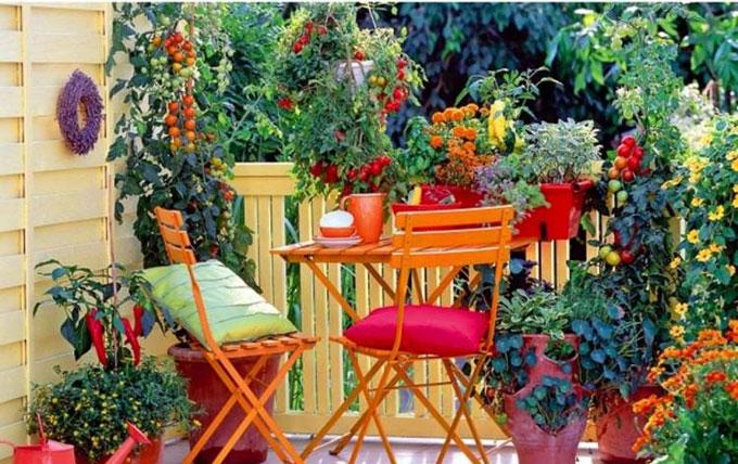 Le jardinage en ville, c'est possible !