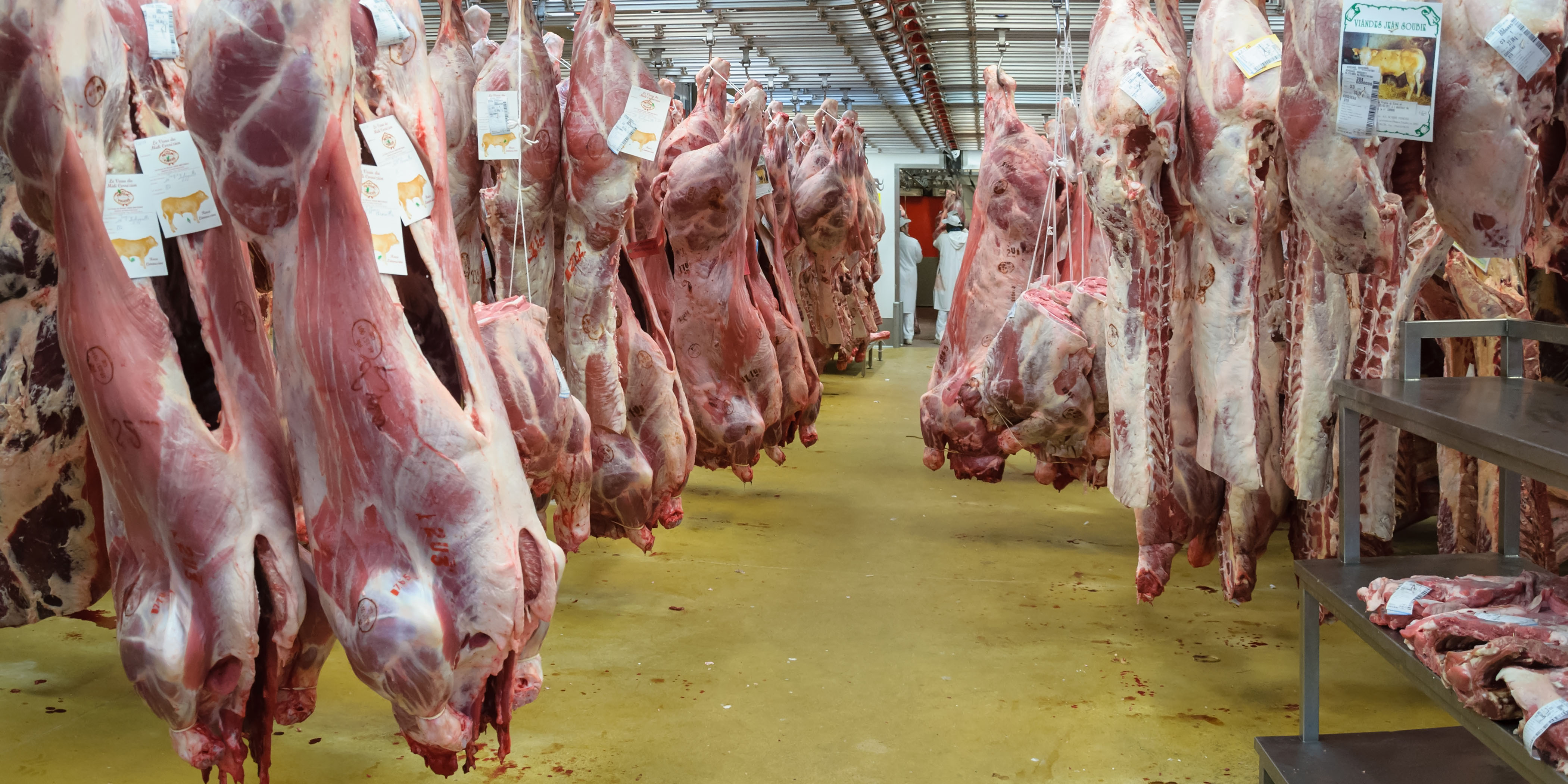 Belgique : l'interdiction de l'abattage sans étourdissement approuvée en Wallonie