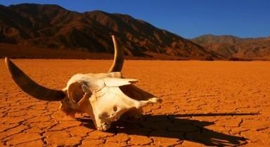 Biodiversité : la sixième extinction de masse en marche, de l'urgence de renverser la vapeur