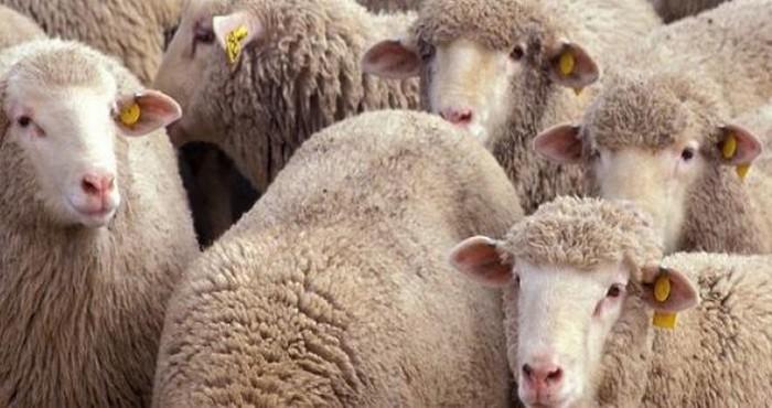 Aïd al-Adha 2019 : le nombre d'abattoirs temporaires agréés en France en baisse