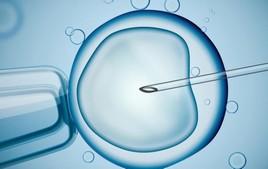 Bioéthique : le CFCM fait valoir son point de vue et ses inquiétudes aux parlementaires