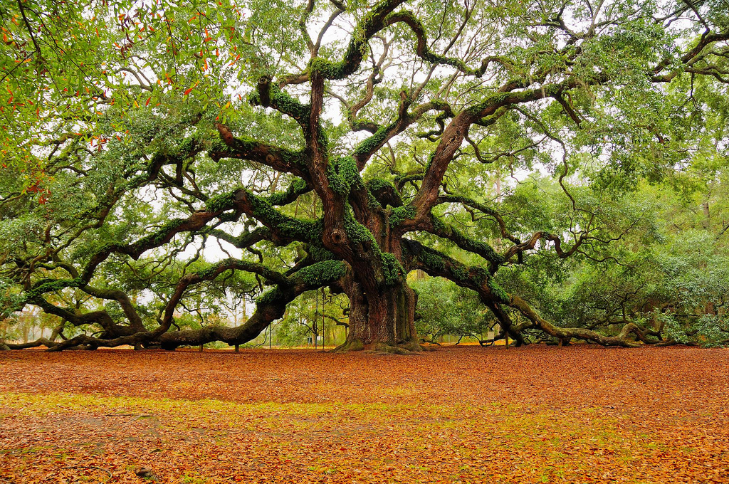 Abdessalam Yassine, un arbre bien (an)raciné