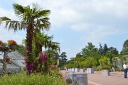 Le jardin andalou inauguré au cœur du parc de la Tête d'Or dans le cadre des 20 ans de la Grande Mosquée de Lyon.