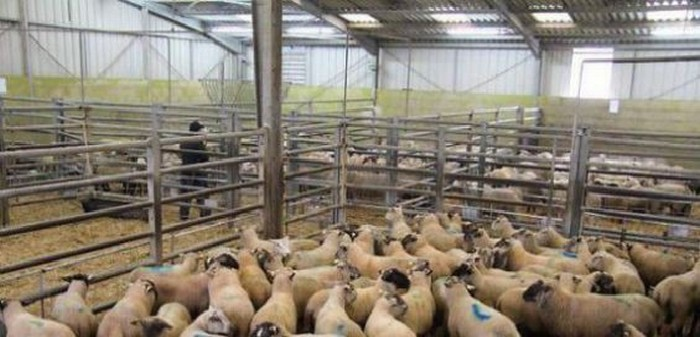 Aïd el-Kébir 2014 : une centaine d'abattoirs agréés en France