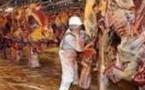 Halal : un réseau d'abattage clandestin démantelé