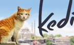 Kedi, des chats, des hommes... mais aussi de la grâce, de l'universel et de l'amour