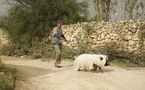 Tout est bon dans « Le Cochon de Gaza » !