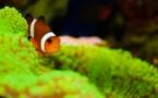 Pourquoi la sauvegarde de la biodiversité est un devoir moral