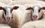 Aïd al-Adha 2019 : face aux interdictions, l'Exécutif des musulmans de Belgique fait le point sur l'organisation de la fête