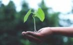 Plaidoyer pour une écologie islamique de transformation