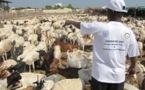 Aïd el-Kébir : le sacrifice par procuration, une pratique tendance