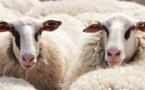 Belgique : l'Aïd al-Adha 2020 à l'épreuve face au Covid-19 et aux interdictions de l'abattage sans étourdissement