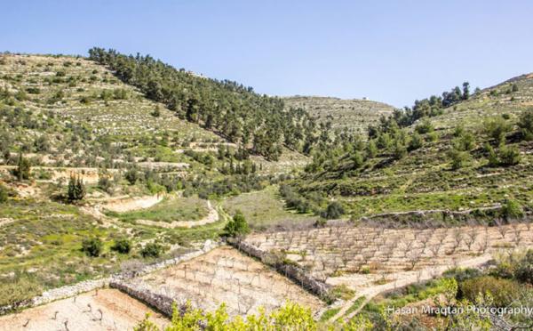 Sortie des radars médiatiques, la Palestine n'est plus