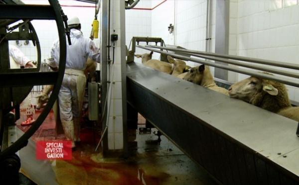 Feurat Alani : « Le laisser-faire sur le marché du halal est scandaleux »